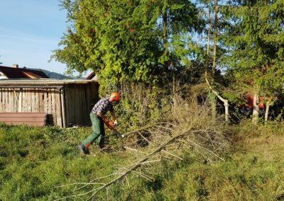 Bäume entfernen